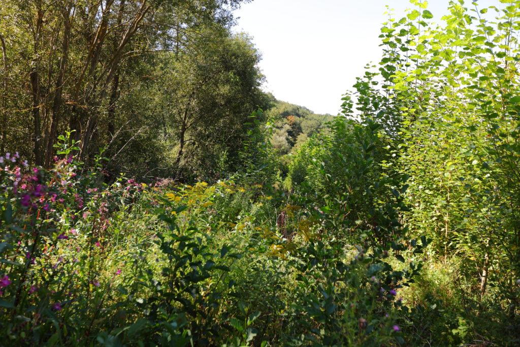 Auen können Hotspots der Biodiversität sein, Hochwasser und Nährstoffe zwischenspeichern und gleichzeitig durch die Landwirtschaft genutzt werden (Ingweiler Hof in RLP).